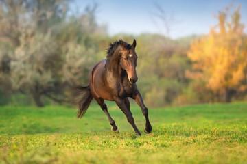 Koń w ruchu w jesień krajobrazie