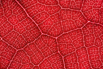 Abstract red leaf cells separated with veins. Artistic pattern design background.