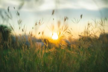 Prairie grasses twilight
