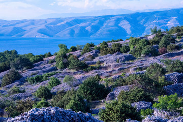 Hvar is world famous for its lavender, which is of the highest quality in the world. Due to its unique climate and year-round sunshine, the lavender grows in abundance.