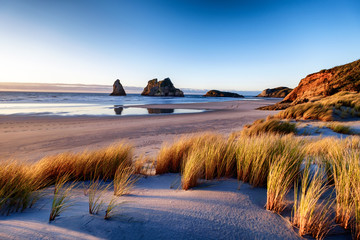 Morning sunrise with bushes and grass at Wharariki Beach New Zealand