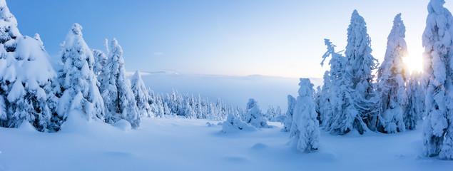 Zimy śnieżny świerkowego drzewa lasu panoramiczny widok