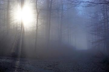 Gegenlicht im Waldweg