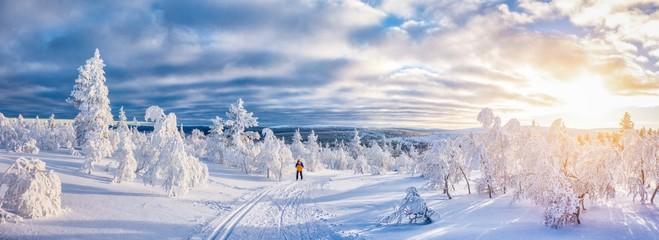 Cross-country skiing in winter wonderland in Scandinavia at sunset