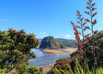 Piha Beach, Lion Rock i kwitnące drzewa pohutukawa w grudniu, Nowa Zelandia