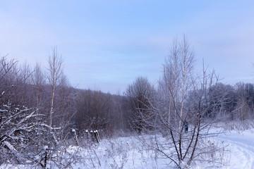 Sunny day in winter.Field and trees in Chuvashia in Russia.