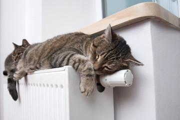 kot leży na baterii w zimny dzień