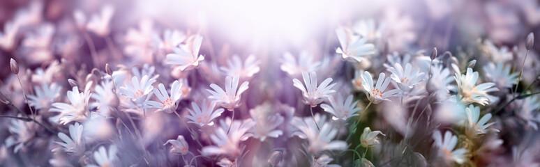 Kwitnący biały kwiat, wiosna w łące