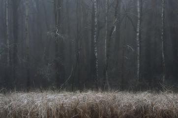 Drzewa i trzciny
