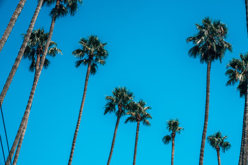 Beautiful Los Angeles palms during hot summer day. Summer spirit and vibes in California.