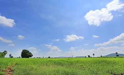 Beautiful cloud on blue sky in green field and tree. Landscape summer scene background.