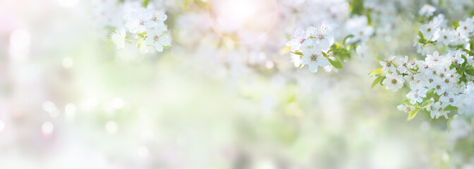 Spring time with cherry blossoms