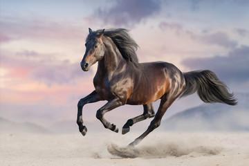 Podpalany koń biega cwał w pustynnym piasku
