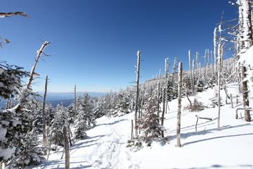 北八ヶ岳の冬景色