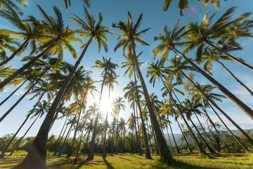 Bright blue sky over l'Etang Saint Paul in Reunion Island