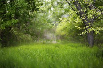 Piękny zielony las lato. Tło wiosna, tło