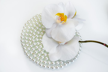 pearl and white orchid on a white glas