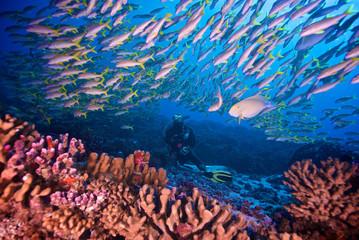 Nurek z rybką na rafie koralowej