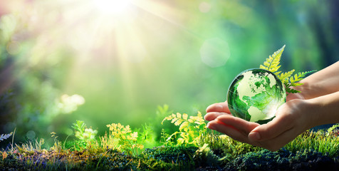 Hands Holding Globe Glass In Green Forest - Environment Concept