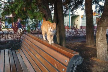 gentle street cat