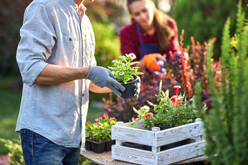 Guy gardener in garden gloves puts the pots with seedlings in the white wooden box on the table and a girl prunes plants in the wonderful nursery-garden on a sunny day.