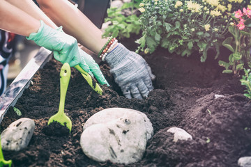 Spring gardening, planting flower seedlings, gardeners hands in protective gloves in the ground