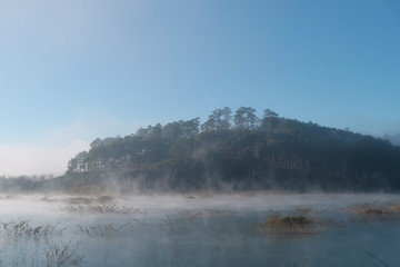 shrubs and pine forest reflection on the lake with dense fog, magic light and blue sky at sunrise