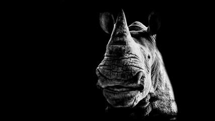 Portret uśmiechnięta nosorożec na czarnym tle