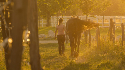 LENS FLARE: Unrecognizable woman walking down the path with her horse and puppy