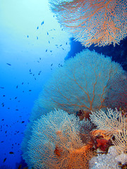 Niesamowity podwodny świat Morza Czerwonego.