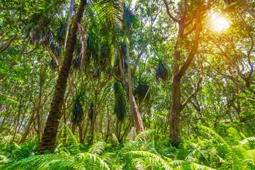 Jungle forest Jozani Chwaka Bay National Park, Zanzibar, Tanzania
