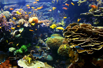 Colorful real photo of the seabed, an aquatic environment, with lots of different fish species.