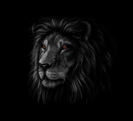 Portrait of a lion head on a black background