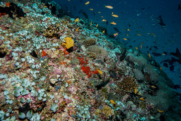 Coral reef at the Maldives