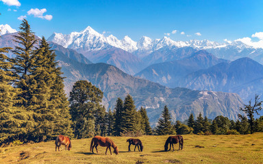Scenic landscape view with majestic Himalayan Panchchuli mountain range at Munsiyari Uttarakhand India with wild horses grazing the Himalayan pastures.