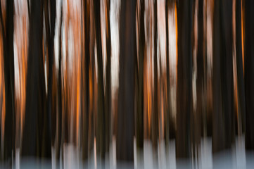 abstract winter forest at sunset - wiping effect - long exposure time