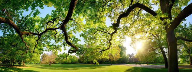 Tranquil panoramic scenery in a beautiful park