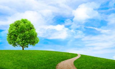 Tapeta lato zielony krajobraz widok malownicze. Piękne tapety. Odludny drzewo na trawiastym wzgórzu i niebieskim niebie z chmurami. Samotne drzewo na wiosnę. Zielona planeta Ziemia. Zdjęcie zdjęcie.