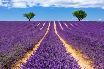 Provence, France. Valensole plateau.