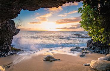 Żółwie w jaskini