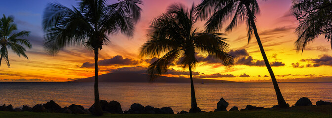 Hawaii sunset with palm trees