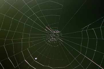 Spider web isolate. Brown background
