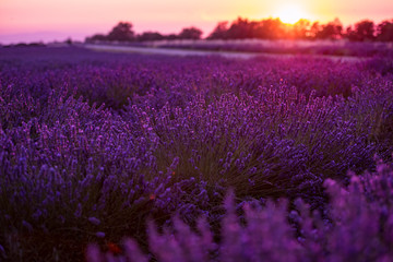 colorful sunset at lavender field