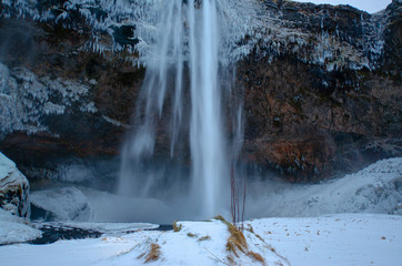 Iceland waterfall seljalandsfoss frozen in winter, close up with tall grass