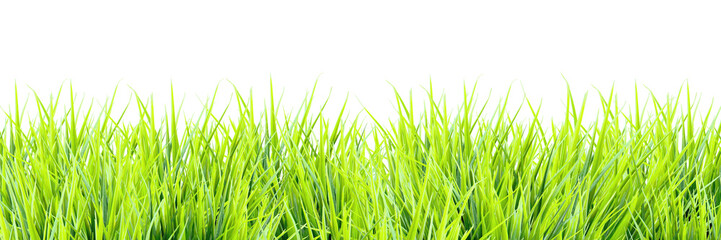 Fresh spring greens isolated on white background. Green grass sprouts, panoramic view