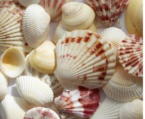 Sea shells group