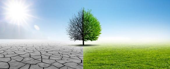 Susza i zielona natura