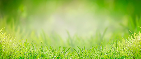 Green grass background, banner. Summer or spring nature. Sunny day