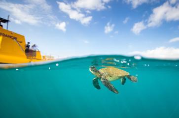 Żółw płynie po oddechu