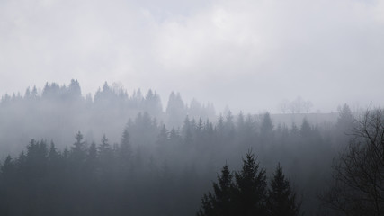 Foggy mountains are a picturesque landscape